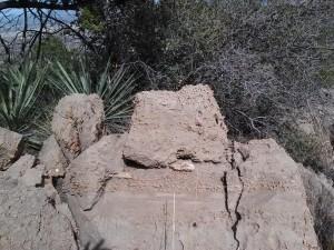 Chasm Creek Fossils